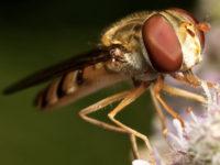 Laboratori didattici - Il mondo degli insetti