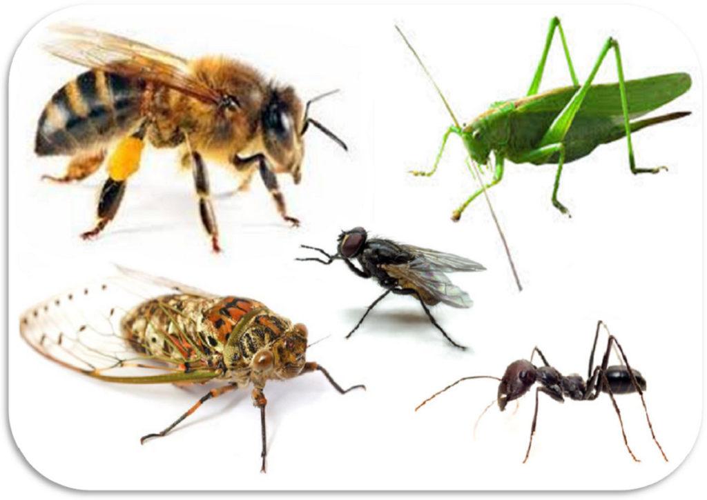 Il mondo degli insetti - Origini e morfologia